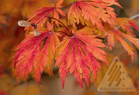 Intense fall foliage colors