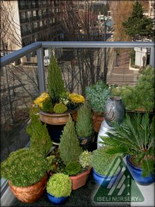Balcony Containers