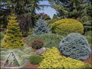 Colorful Conifers in the Jean Iseli Memorial Garden