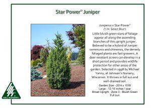 Juniperus x Star Power® ('J.N. Select Blue')