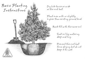 General Planting Instructions